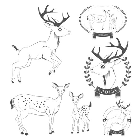 whitetail deer: Set of vintage deer, emblems, labels, logo vector