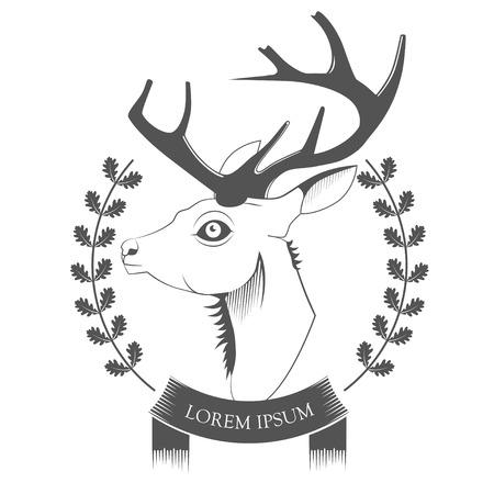 venado cola blanca: Deer Head en el fondo blanco vector Vectores