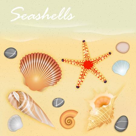 conch: Seashells Vector Illustration