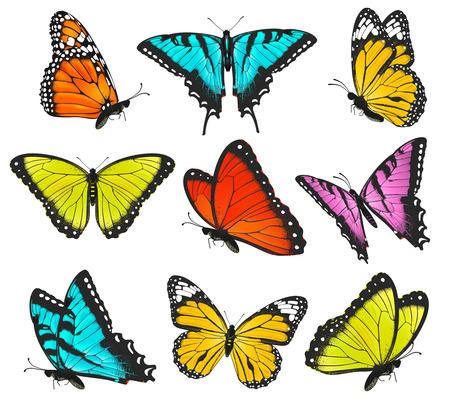 Set of colorful butterflies vector illustration Illustration