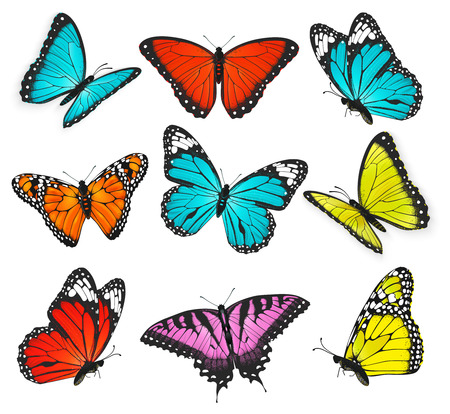 Set of colorful butterflies vector illustration 일러스트