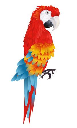 Een heldere ara papegaai op een witte achtergrond vector illustratie