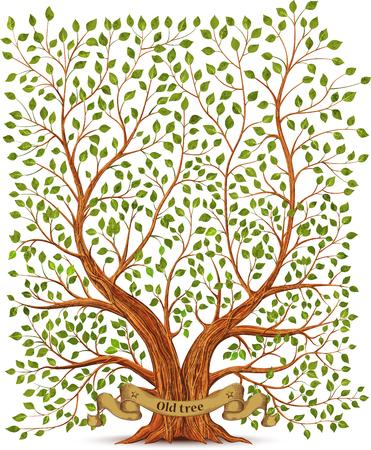 olive green: Old vintage tree vector illustration Illustration
