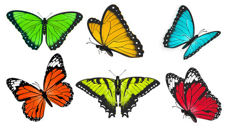 butterfly isolated: Set of realistic, bright and colorful butterflies, butterfly illustration Illustration