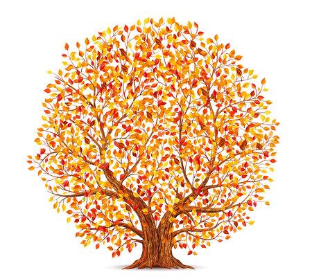 Autumn tree isolated on white Banco de Imagens - 112601439