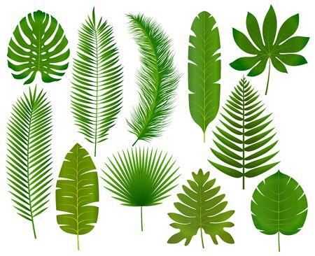 Tropical leaves collection vector illustration Banco de Imagens - 131263776