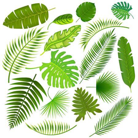Tropical leaves collection vector illustration Ilustración de vector