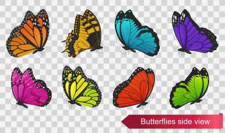 Butterflies side view isolated on transparent background. Vector illustration Ilustração
