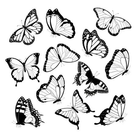 Black and white flying butterflies. Isolated on white background. Vector illustration.