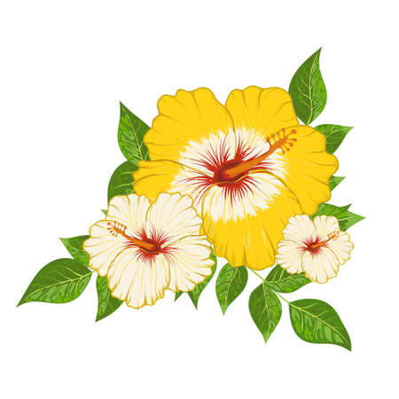 Composition of hibiscus flowers and leaves vector illustration