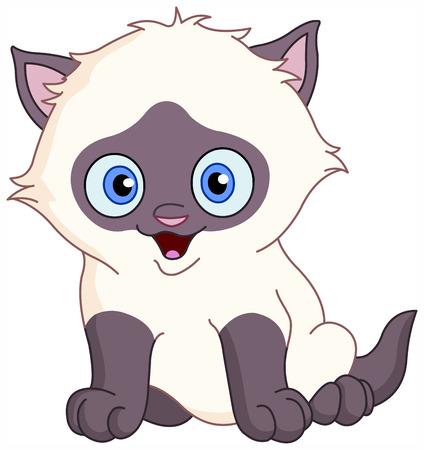 siamese: Siamese kitten