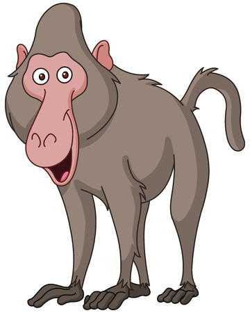 Smiling baboon