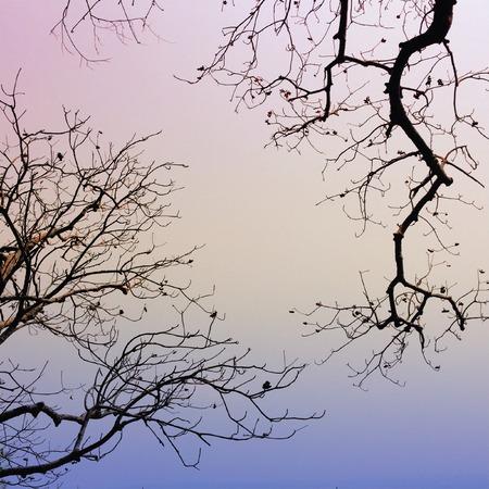 coloful: Dead branches coloful Stock Photo