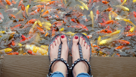 Close Up on Girls Feet Wearing Silver Sandals and Red Nails with Fancy Carp Swimming in The Pond Background Great For Any Use.