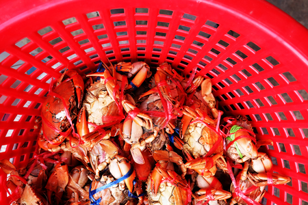 Fresh Mud Crabs, Sea Crab with Natural on Red Basket Background Great For Any Use.