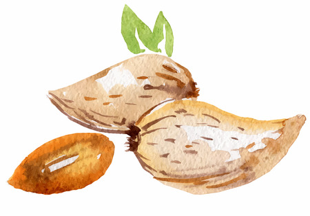 almonds in watercolor on the white background