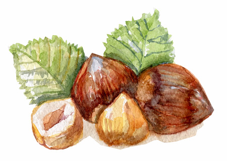 hazelnuts in watercolor on the white background