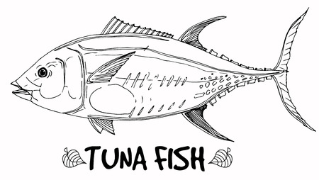 Tuna fish doodle in lines on white background. Vector ready for fish shop.