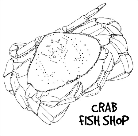 fish shop: Crab in lines on white background.Vector ready for fish shop. Illustration