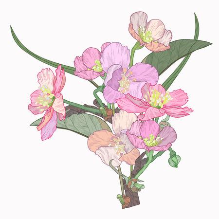 Blooming plum tree hand drawn vector illustration.Retro vintage boho doodle.