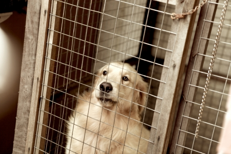 lonely dog in captivity, tear in eye photo