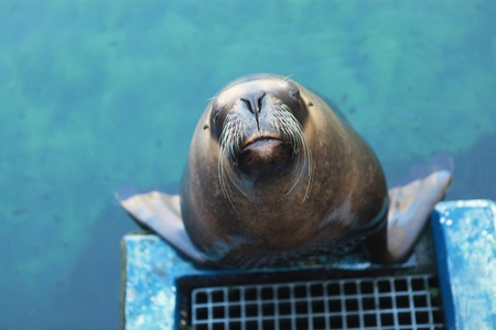 please kiss me, says the sea lion