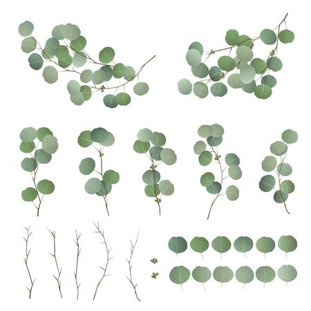 Eucalyptusbladeren en takcollectie. Verzameling van eucalyptusboom gebladerte, natuurlijk gezaaid, takken en stengels geïsoleerd op een witte achtergrond. Vector illustratie