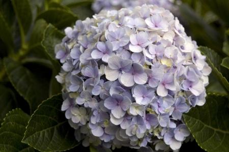 purples: Blue Purples Ball