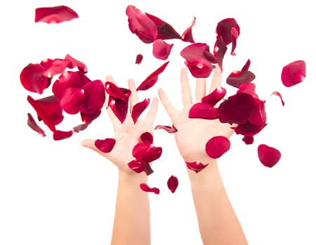 throwing up the petals isolated on white