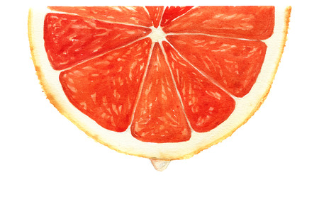 segment: Watercolor segment of grapefruit with drop of juice Stock Photo