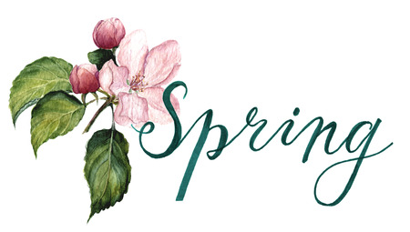 Watercolor apple blossom with lettering Spring. Botanical illustration