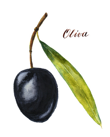 black olive: Watercolor black olive with sheet Stock Photo