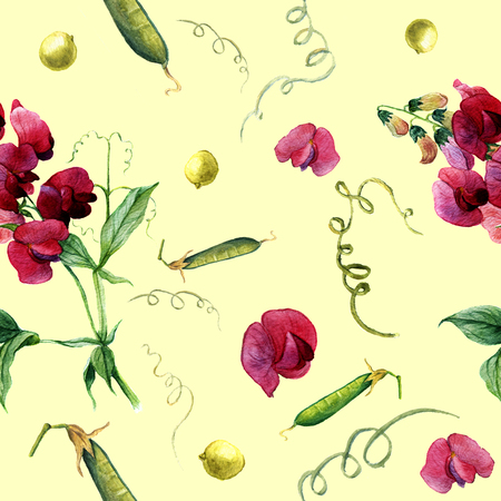 sweet pea: Watercolor pattern with sweet pea and green peas. Botanical illustration