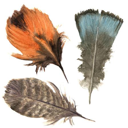 Hand getekende aquarel levendige veren set. Boho veer stijl. illustratie veer. geïsoleerd op wit. Vogel veer vlieg ontwerp voor T-shirt, uitnodiging, huwelijk card.Rustic veer. Heldere kleur.