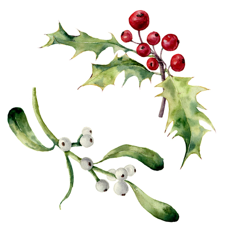 Watercolor holly and mistletoe set. Hand painted christmas floral element isolated on white background. Botanical illustration for design.