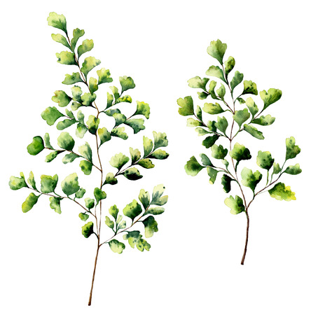 수채화 maidenhair 고 사리 잎과 가지. 손으로 그린 고 사리 식물 요소입니다. 꽃 그림 흰색 배경에 고립입니다. 디자인, 섬유 및 배경