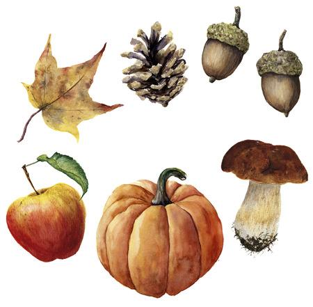 水彩の秋の収穫を設定します。手描きの松ぼっくり、どんぐり、カボチャ、リンゴ、キノコと黄色の葉が白い背景で隔離。植物イラスト デザイン。 写真素材