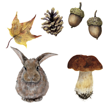 Watercolor autumn forest set. Hand painted pine cone, acorn, hare, mushroom and yellow leave isolated on white background. Botanical illustration for design.