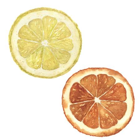 Watercolor orange and lemon set. Hand painted citrus food illustration isolated on white background. Botanical illustration for design.