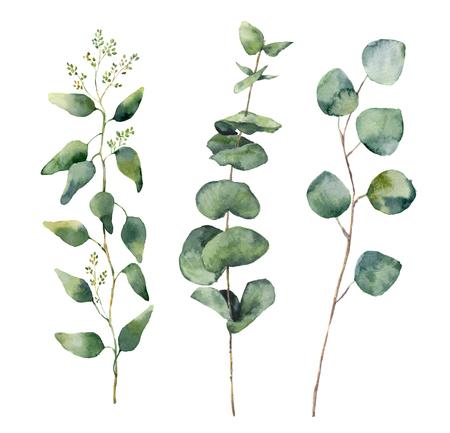 수채화 유칼립투스 둥근 잎과 가지를 설정합니다. 손으로 그린 아기, 시드와 실버 달러 유칼립투스 요소입니다. 꽃 그림 흰색 배경에 고립입니다.