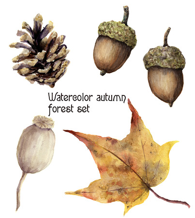Watercolor autumn forest set. Hand painted pine cone, acorn, berry and yellow leave isolated on white background. Botanical illustration for design. Stock Photo