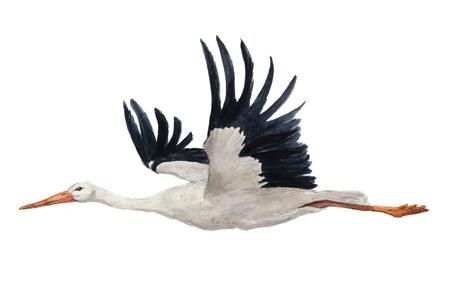 수채화 비행 흰 황새입니다. 손으로 그린 ciconia 조류 그림 흰색 배경에 고립. 디자인, 지문 또는 배경. 스톡 콘텐츠