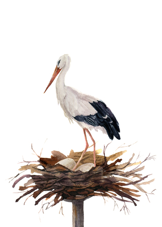 Watercolor white stork in the nest hatching eggs. Ciconia bird illustration isolated on white background. For design, prints or background.