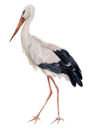 Aquarel witte ooievaar. De vogelillustratie van Ciconia die op witte achtergrond wordt geïsoleerd. Voor ontwerp, afdrukken of achtergrond. Stockfoto
