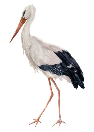 Watercolor white stork. Ciconia bird illustration isolated on white background. For design, prints or background.