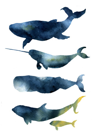 blue whale: Watercolor whales set. Hand drawn sea animals silhouettes with sky texture. Prints with blue whale, harwhale, cachalot, orca isolated on white background. For design, print, fabric and background Stock Photo