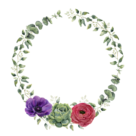 eucalyptus: Watercolor floral wreath with eucalyptus, baby eucalyptus leaves, ranunculus, anemone and succulent. Hand painted floral border with branches and flowers isolated on white background