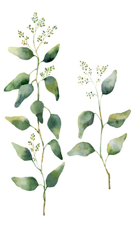 Watercolor eucalyptus leaves and branches with flowers. Hand painted flowering eucalyptus. Floral illustration isolated on white background. For design, textile and background Standard-Bild