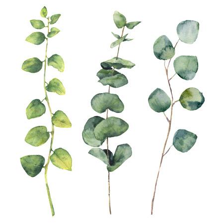 수채화 유칼립투스 라운드 나뭇잎과 나뭇 가지. 손으로 그린 아기와 실버 달러 유칼리 나무, 나뭇 가지 허브 요소입니다. 꽃 그림 흰색 배경에 고 스톡 콘텐츠