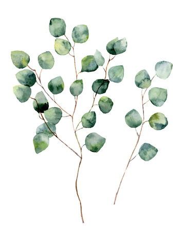 Watercolor silver dollar eucalyptus with round leaves and branches. Hand painted eucalyptus elements. Floral illustration isolated on white background. For design, textile and background Foto de archivo